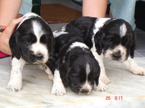 En el medio, Manchita, a los pocos días de nacer.